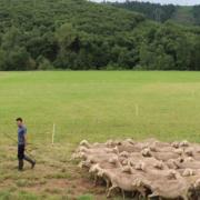 Roquefort en fête festival programme brebis lacaune