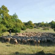 Roquefort en fête programme festival pastoralisme et biodiversité
