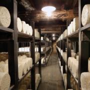 Roquefort en fête programme festival visite de caves